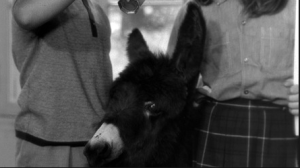 Balthazar as a young donkey.